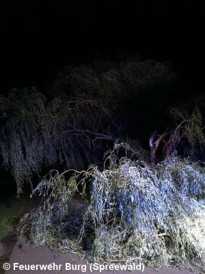 Vorschaubild zur Meldung: Einsatz Nr. 149/2017 - Baum über Strasse