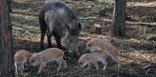 Schweinepest-Monitoring Landkreis TF 29.09.2017