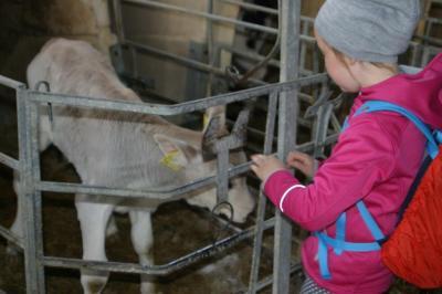 Foto zur Meldung: 4. Klasse - Ausflug in den Kuhstall