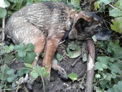 Vorschaubild zur Meldung: Hund zum Sterben ausgesetzt - wir bitten um Mithilfe!