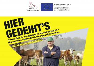 Vorschaubild zur Meldung: Info-Kampagne der europäischen Struktur- und Investitionsfonds in Brandenburg: #BrandenburgDaGehtWas