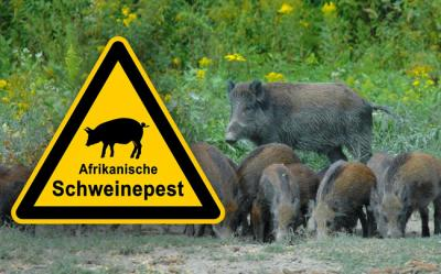 Foto zur Meldung: Kreis warnt vor Tierseuchen – Geflügel- und Schweinepest bedrohen die Region – Jäger und Bürger sollen helfen