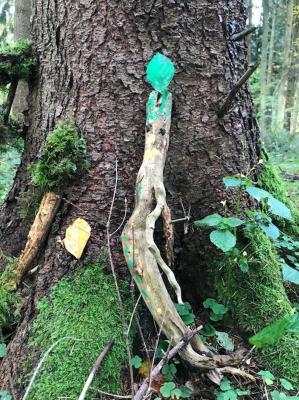 Vorschaubild zur Meldung: Waldwoche