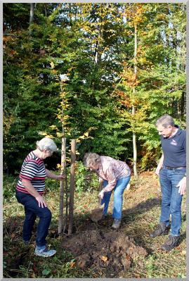 Foto zur Meldung: Seniorenkreis Bühren pflanzte einen Baum