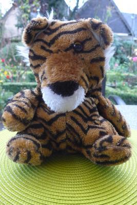 Vorschaubild zur Meldung: Hilfloser einäugiger Tiger auf Range GC Hatten gefunden