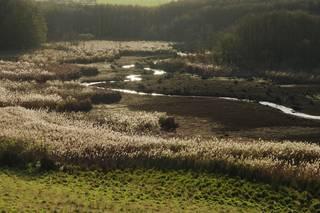 """Vorschaubild zur Meldung: Informationsveranstaltung am 23.11.2017 im Rahmen der Managementplanung """"Natura 2000"""" mit Nutzern und Eigentümern zu geeigneten Schutz-und Bewirtschaftungsmaßnahmen"""