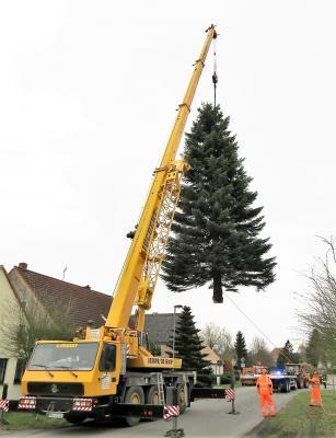 Foto zur Meldung: Weihnachtsbaumaufstellung 2017