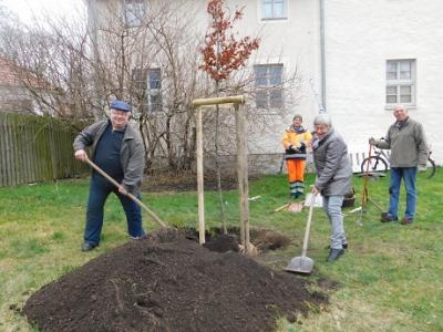 Vorschaubild zur Meldung: Baum gesponsert