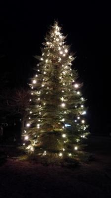 Vorschaubild zur Meldung: Aufstellen des Weihnachtsbaumes