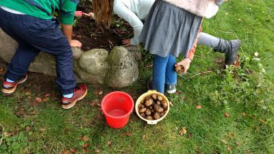 Foto zu Meldung: Erfolgreiche Kartoffelernte