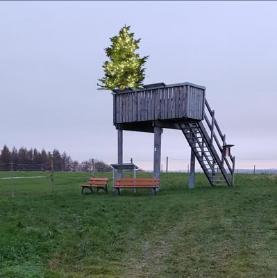 Der leuchtende Schleifenbaum