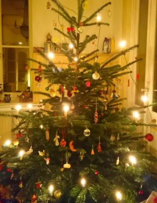 Vorschaubild zur Meldung: Wohin mit dem alten Baum? Termine zur Weihnachtsbaumentsorgung