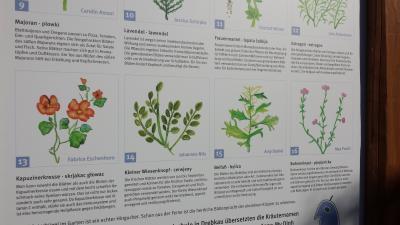 """Vorschaubild zur Meldung: Sonderwettbewerb """"Soziale Natur"""" in der UN-Dekade Biologische Vielfalt (2011-2020)"""