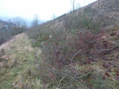 Vorschaubild zur Meldung: Landschaftspflegeprojekt in der Wutsche gestartet