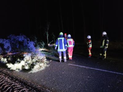"""Foto zu Meldung: """"Friederike"""": Wehren im Fläming haben viel zu tun"""