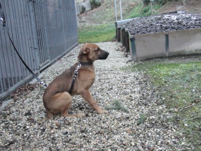 Foto zur Meldung: Hund gefunden