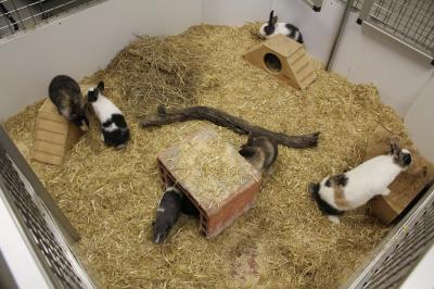 Vorschaubild zur Meldung: Neuer Auslauf im Kleintierhaus