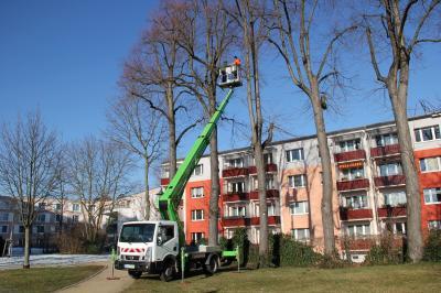 Mitarbeiter der Fachgruppe Kommunalservice und Baumexperte Thomas Schmidt testen die neue Hebebühne