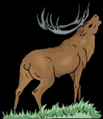 Vorschaubild zur Meldung: Die Jagdgenossenschaften Waltersdorf, Langengrassau, Walddrehna, Weißack, Riedebeck und Gehren informieren