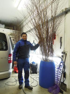 Foto zur Meldung: Birken in der Autowerkstatt