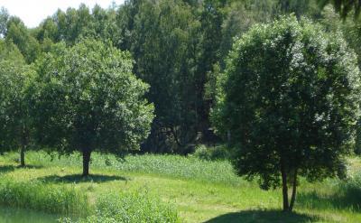 Niemegker Bäume