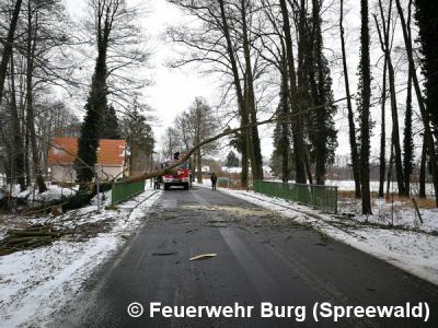 Vorschaubild zur Meldung: Einsatz Nr. 28/2018 - Baum über Brücke
