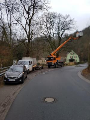 Foto zur Meldung: Bäume zurückschneiden