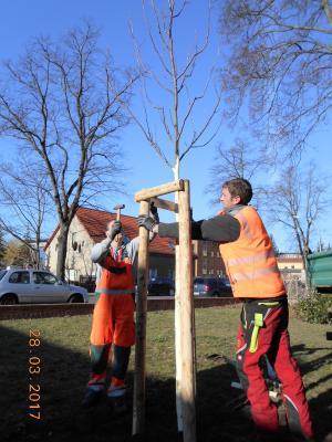 Vorschaubild zur Meldung: Frühjahr ist Pflanzzeit: 56 Bäume und rund 300 Sträucher werden in den Boden gebracht
