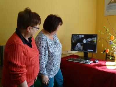 Vorschaubild zur Meldung: Vogelkamera lockt wieder in die Kyritzer Altstadt