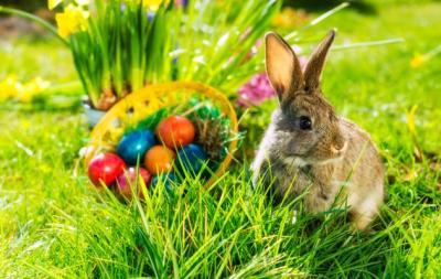 Vorschaubild zur Meldung: Frohe Ostern!