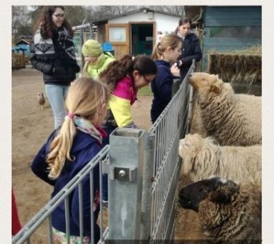 Bei den Schafen/Kinder- und Jugendfarm Darmstadt