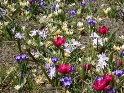 Vorschaubild zur Meldung: Frühling = Sonne + Blumen. Zarte Frühblüher verschönen uns die ersten warmen Tage