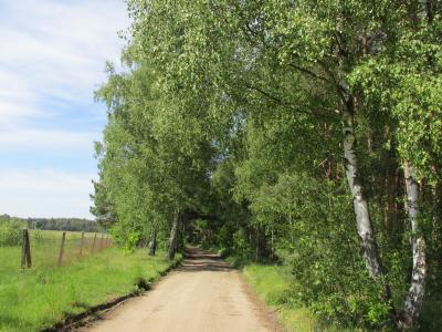 Vorschaubild zur Meldung: Kastanienallee: Baumaßnahme beginnt