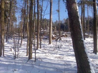 Archivbild Sturmschäden im Bettendorfer Wald