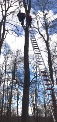 In gut 18 Metern Höhe saß der Flieger in einem Baum fest.
