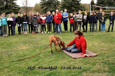 Foto zur Meldung: Rettungshunde im Einsatz