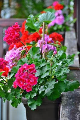 Vorschaubild zur Meldung: Sommerblumen um 30% reduziert!