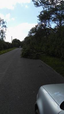 Foto zur Meldung: OV Dannenberg - Krummenpfahl Baum auf Straße