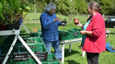 Foto zur Meldung: SVZ - Lokales über 7. Pflanzentauschbörse