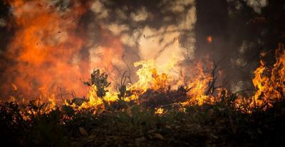 Foto zur Meldung: Aktuelle Waldbrandgefahrenstufe