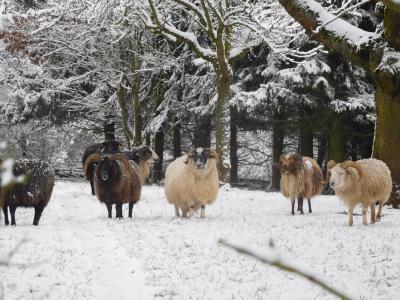 Vorschaubild zur Meldung: Fotospaziergang durch die Jahreszeiten - Wintertour
