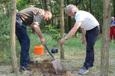 """Der Ausschussvorsitzende Matthias Kurth (links) und Bürgermeister Werner Suchner pflanzen in der Herrenheide den """"Baum des Jahres"""", die Esskastanie. Foto: Stadt Calau"""