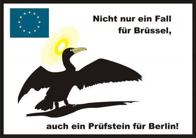 Foto zu Meldung: EU- Parlament fordert die EU-Kommission auf, die Kormoranbestände drastisch zu reduzieren