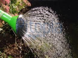 Vorschaubild zur Meldung: Bäume im öffentlichen Raum brauchen dringend Wasser I Aufruf an alle zur Unterstützung beim Wässern