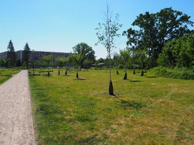 Jungbäume mit Gießsäcken im Nordpark