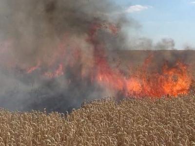 Vorschaubild zur Meldung: 50 Hektar Weizen verbrennen in der Börde
