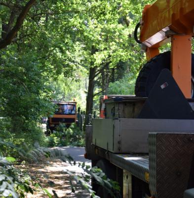 Vorschaubild zur Meldung: Gemeinde startet Baumpflegearbeiten an Radwegen