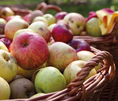 Vorschaubild zur Meldung: Netzwerk Streuobst: Wieder Apfelsammlungen - Neukunden können in dieser Saison leider nicht angenommen werden.