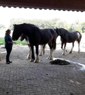 Foto zur Meldung: 2018_2019 Pferde AG