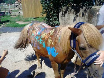 Ein Pferd wie von Pippi Langstrumpf